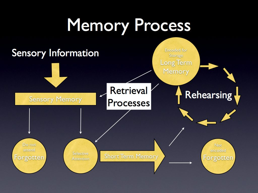 the process of memory storage The memory process involves three domains: encoding, storage, and retrieval encoding - processing incoming information so it can be retrieval is the process of recalling stored information from memory basically, it is getting information out of your long-term memory and returning it to your.
